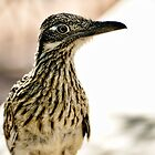 Greater Roadrunner  by Saija  Lehtonen