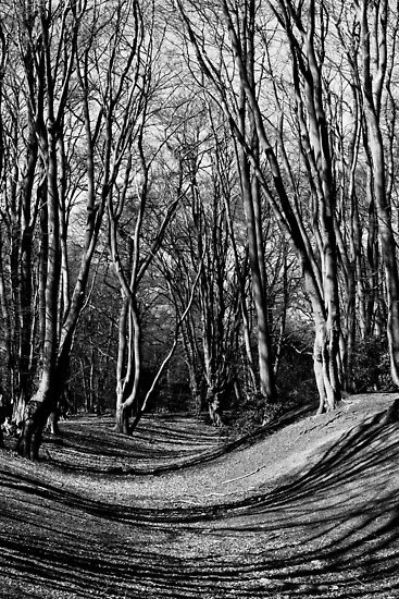 English Forest Trees  by DavidHornchurch