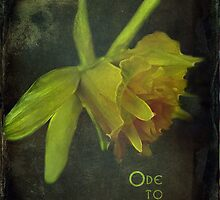 Ode to Spring by vigor