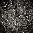 What a tangled web we weave... by Marcia Rubin