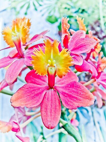 Beautiful Orchid by Marcia Rubin