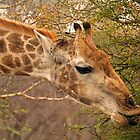 Hot lips by Explorations Africa Dan MacKenzie