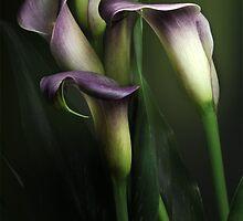 Calla Lily by EbyArts