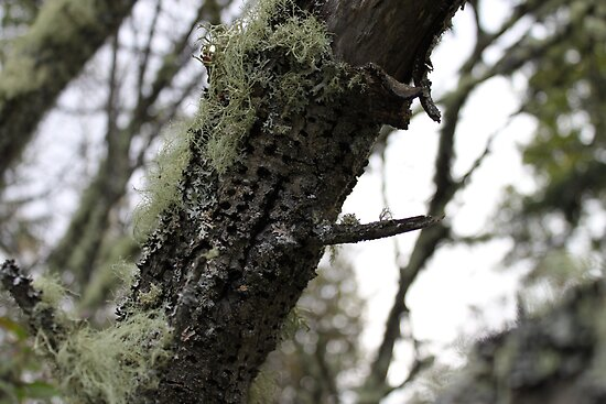 Lichen And Wood Pecked Leaning Tree by Sandra Foster