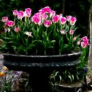 Pink Tulips in Fractalius by Karen Checca