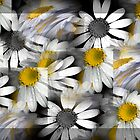 Crazy Daisys by Karen Lewis