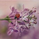 Ladybird on purple lilacs by Ellen van Deelen