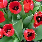 Inside Red Tulips by Nevermind the Camera Photography