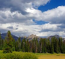 Teton National Forest by Harry Oldmeadow