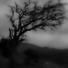 Comeragh Mountains - Misty Tree by Royston Palmer