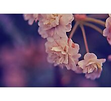 bursting into the purple wonder Photographic Print