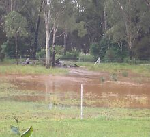 Rubyvale Qld rising flood waters by 4spotmore