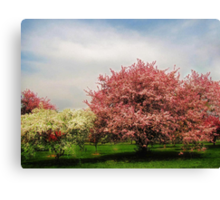 Spring-Arie den Boer Crab Apple Arboretum Canvas Print