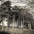 Looming - Perry Woods  by Rhys Herbert