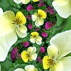 Violas by Kelly Cavanaugh
