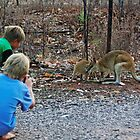 Children taking pictures of two wallabies by Debellez