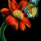 If you love Butterflies and Flowers by Deborah Vicino