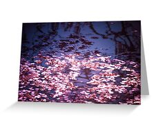 Spring's Embers - Cherry Blossom Petals on the Surface of a Pond Greeting Card