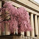 Pink Tree, Classical Columns by Jane McDougall