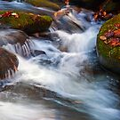 Smoky Mtn Autumn Stream - 418 by   Paul W. Faust