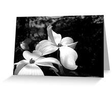 BW Sunlit Dogwood Blossoms Greeting Card