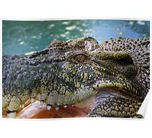 Crocodilian with open mouth Poster