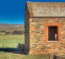 Spring Lamb - Sedan, Murraylands, South Australia by Mark Richards