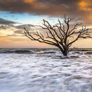 Botany Bay Edisto Island SC Boneyard Beach Sunset by Dave Allen