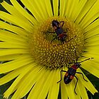 Bugs on Flower by SophiaDeLuna