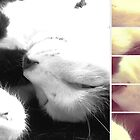 sleepy kitty by Jamie McCall