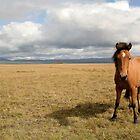 Icelandic Horse by Cláudia Fernandes