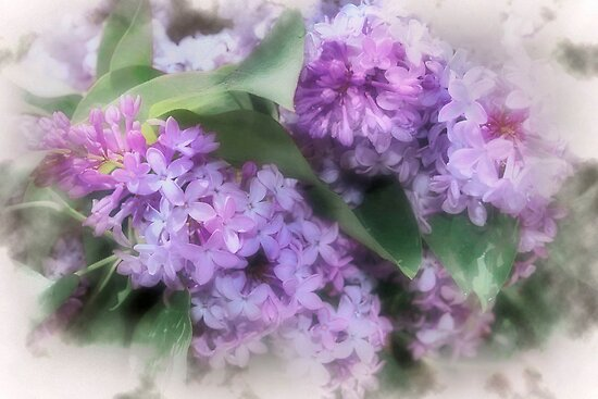 Sweet Purple by Nadya Johnson