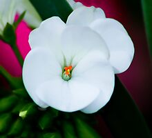 Flower by michelsoucy
