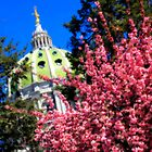 Capitol in Bloom by Shelley Neff