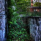 Overgrown stairs... by Okeesworld