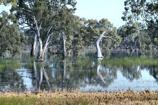 Mallee Forest and Wetlands by Geoffrey Higges