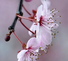 Spring by Robin Nellist