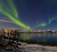Behind the tree by Frank Olsen