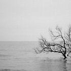 Seaside by Jennie Gardiner