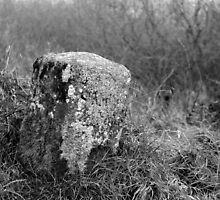 Milestone, Barrow Navigation, County Carlow, Ireland by Andrew Jones