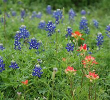 Bluebonnets and Indian Paintbrushes by KRees