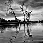 Dead Trees in the water. Aurora reservoir. Colorado. #13 by Anatoly Lerner