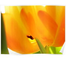 Tulip Textures 10 Poster