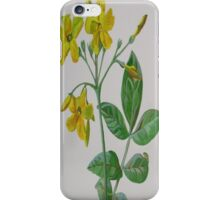 Carolina Jasmine iPhone Case/Skin