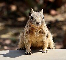 Got Nuts? by Saija  Lehtonen