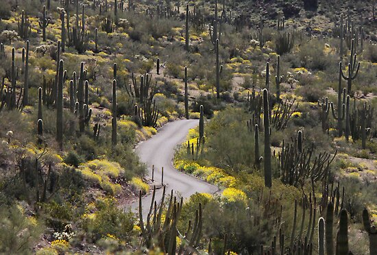 Sonoran desert road by Alice Kahn