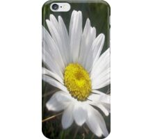 Close Up of a Margarite Daisy Flower iPhone Case/Skin