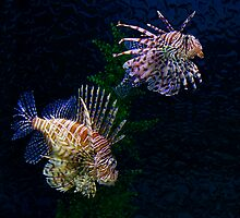 Lionfish Pair by photoworksbyjd