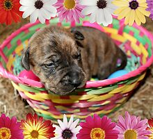 Puppy in a Basket by DebbieCHayes