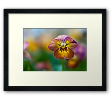 I could stare at you forever Framed Print